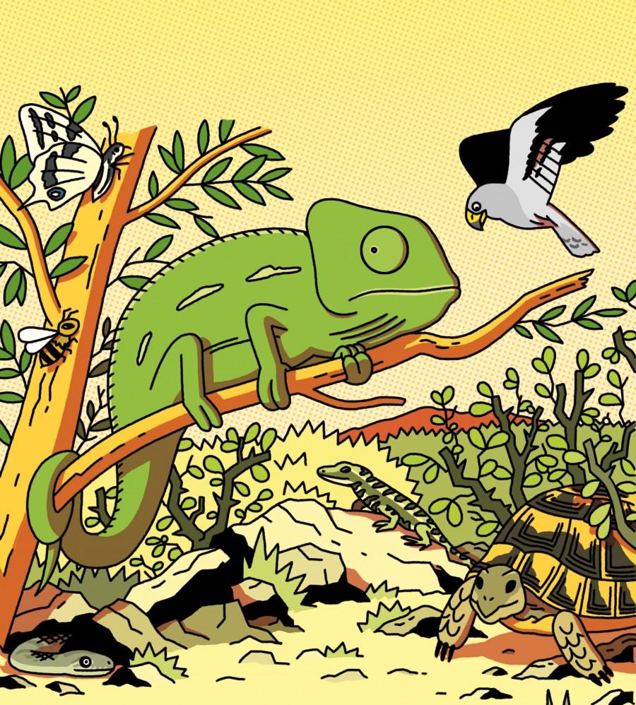 Mathieu Demore, Illustration jeunesse et Bande-dessinée Wapiti Illustrations dans Wapiti - Éditions Milan Presse - Mathieu Demore